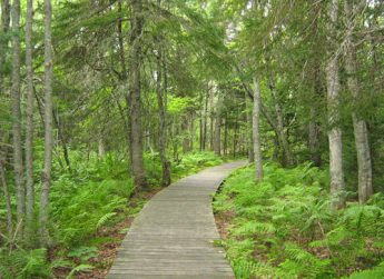 Photo of a trail in Kouchibouguac National Park.